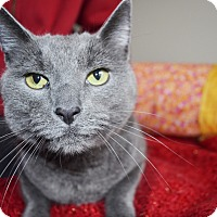 Adopt A Pet :: Buddy - Xenia, OH