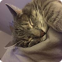 Adopt A Pet :: Stitch - Laguna Woods, CA