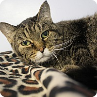 Adopt A Pet :: Magic Madge - Chicago, IL