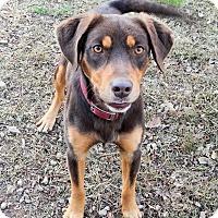 Adopt A Pet :: *Buckley - PENDING - Westport, CT