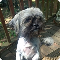 Adopt A Pet :: Cooper - Knoxville, TN