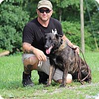 Adopt A Pet :: Uhli - Greeneville, TN