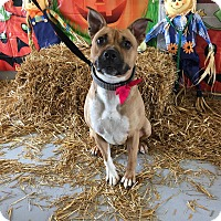 Adopt A Pet :: Ripley - Concord, NC