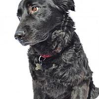 Adopt A Pet :: Brooklyn - Stafford, VA