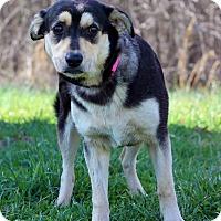 Adopt A Pet :: Alexa - Waldorf, MD