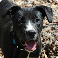 Adopt A Pet :: Piglet - Allentown, PA