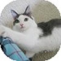 Adopt A Pet :: Lark - Vancouver, BC