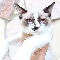 Adopt A Pet :: Hadley - Santa Monica, CA