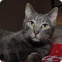 Adopt A Pet :: Jasper - Waxhaw, NC