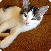 Adopt A Pet :: Sanders - St. Louis, MO