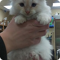 Adopt A Pet :: Tyson - Edmonton, AB