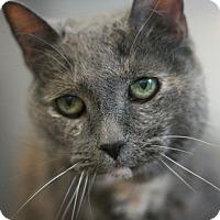 Adopt A Pet :: Callie - Canoga Park, CA