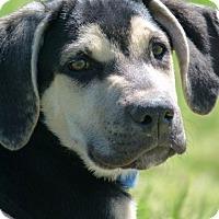 Adopt A Pet :: FRANK AND FAE - MILWAUKEE, WI