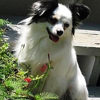 Adopt A Pet :: Dixie (in GA) - Marietta, GA