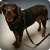 Adopt A Pet :: Hank - Muskegon, MI