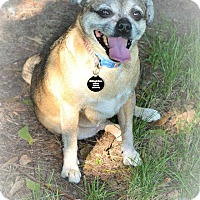 Adopt A Pet :: Candy - Eastpointe, MI