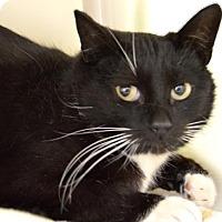 Adopt A Pet :: Poppy - Buena Vista, CO