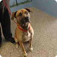 Adopt A Pet :: A500591 - San Bernardino, CA