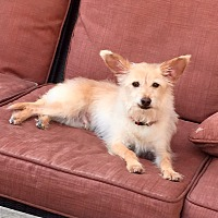 Adopt A Pet :: Buddy - Rancho Cucamonga, CA