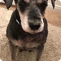 Adopt A Pet :: Ebenezer - Las Vegas, NV