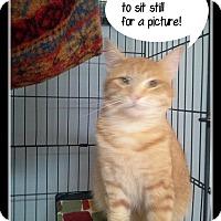 Adopt A Pet :: Mr Goob - Muskegon, MI