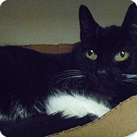 Adopt A Pet :: Johnny Girl - Hamburg, NY