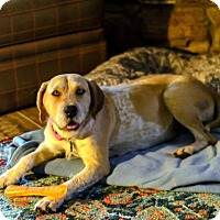 Adopt A Pet :: Suzie - Brattleboro, VT