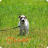 Adopt A Pet :: Oscar - Lebanon, MO