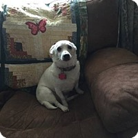 Adopt A Pet :: Popeye (COURTESY POST) - Baltimore, MD