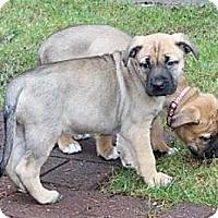 Adopt A Pet :: Abbie - Seattle, WA