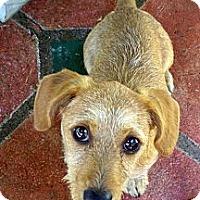 Adopt A Pet :: Campbell - San Jose, CA