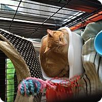 Adopt A Pet :: Seaton - Clay, NY