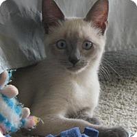 Adopt A Pet :: LotusBlossom - North Highlands, CA