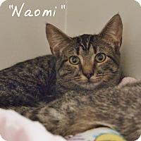 Adopt A Pet :: Naomi - Ocean City, NJ