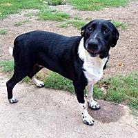 Adopt A Pet :: Opal - Beaumont, TX