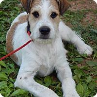 Adopt A Pet :: Petey(30 lb) New Pics & Video - SUSSEX, NJ