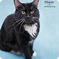 Adopt A Pet :: Chase - Phoenix, AZ