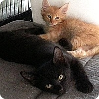Adopt A Pet :: Coal - Galloway, NJ