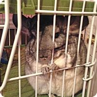 Adopt A Pet :: Lilah May - Granby, CT