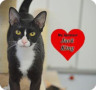 Oriental Cat for adoption in San Leon, Texas - Selena