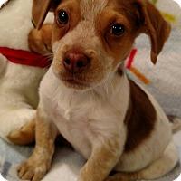 Adopt A Pet :: Mason - Marietta, GA
