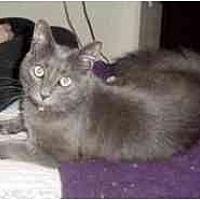 Adopt A Pet :: Pewter - Pasadena, CA