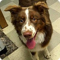 Adopt A Pet :: Loki - Libby, MT