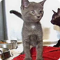 Adopt A Pet :: Robo - Dover, OH