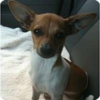 Adopt A Pet :: Ryder - Arlington, TX