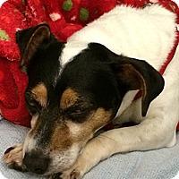 Adopt A Pet :: Mindy - Homewood, AL