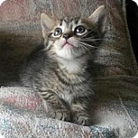 Adopt A Pet :: Skywalker - Ft. Lauderdale, FL