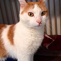 Adopt A Pet :: Bandit - Hanna City, IL