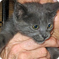 Adopt A Pet :: Whiskers - Lighthouse Point, FL