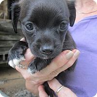 Adopt A Pet :: FLASH - Brookside, NJ